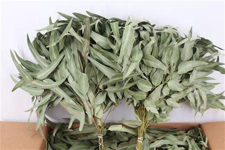 <h4>Dried Euca Leaves Natural 55cm P/b</h4>
