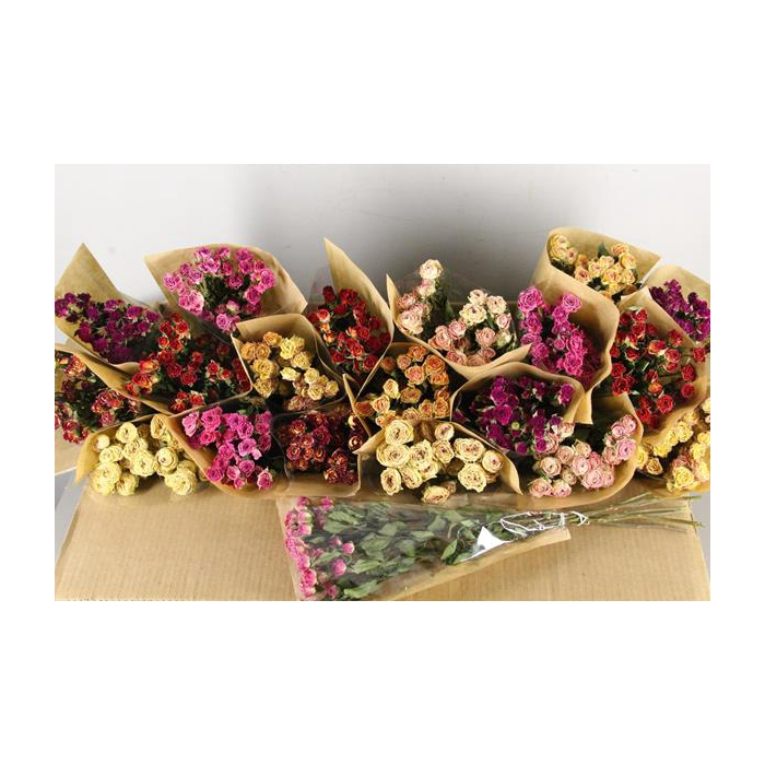<h4>Df Rose Spray Bunch Mix Colors</h4>