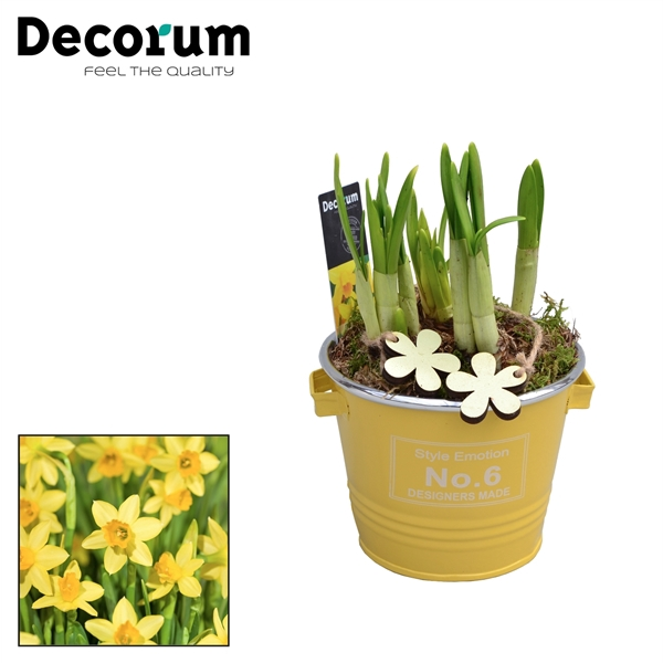 <h4>Narcis Colourful Bucket Mini HL10943N</h4>