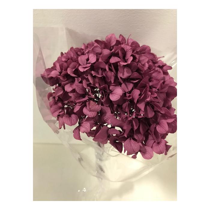 <h4>Hydrangea / Hortensia d15cm paars</h4>