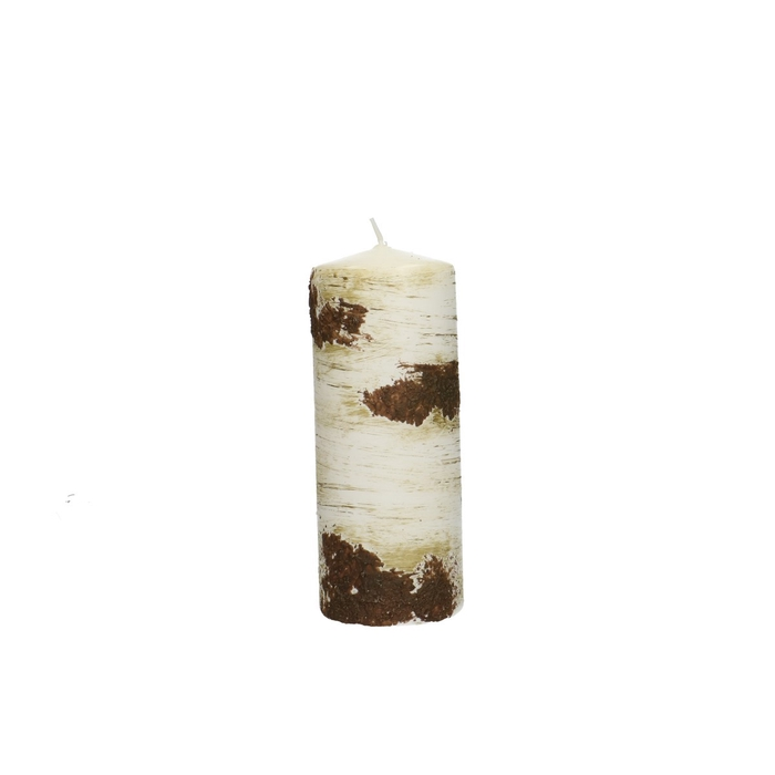 <h4>Candle Cylinder birch tree d06*15cm</h4>