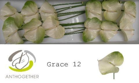 <h4>Anth Grace</h4>