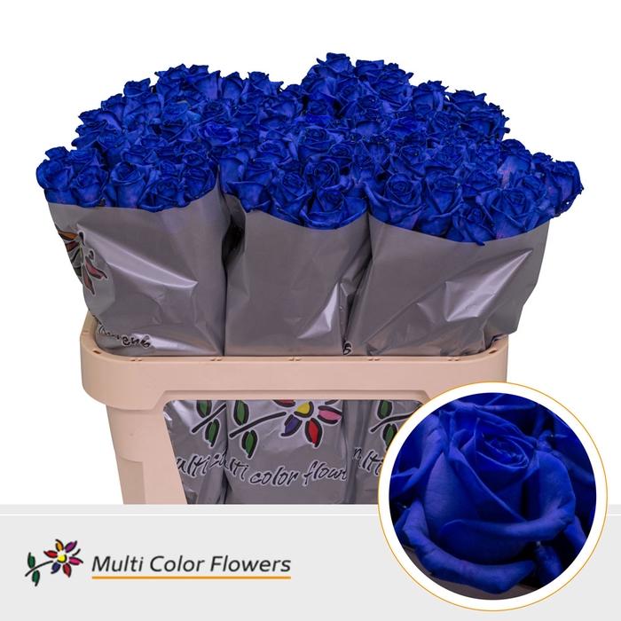 <h4>Rosa Gb.Blauw donker</h4>