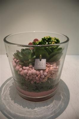 <h4>PTI4901 ROZE DIK GLAS X2 PLANT</h4>