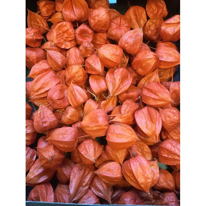 <h4>DRIED FLOWERS - PHYSALIS 100PCS</h4>