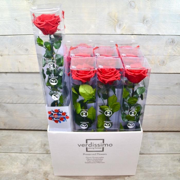 <h4>R PR Amorosa Premium Red XXL</h4>