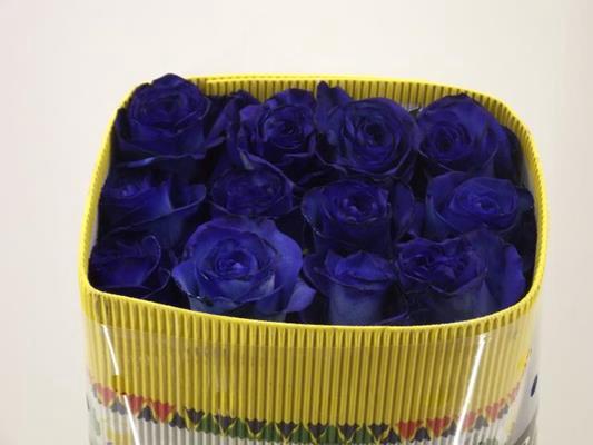 <h4>R Gr Tinted Blue</h4>