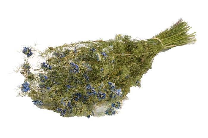 Nigella Flower nat. Craft