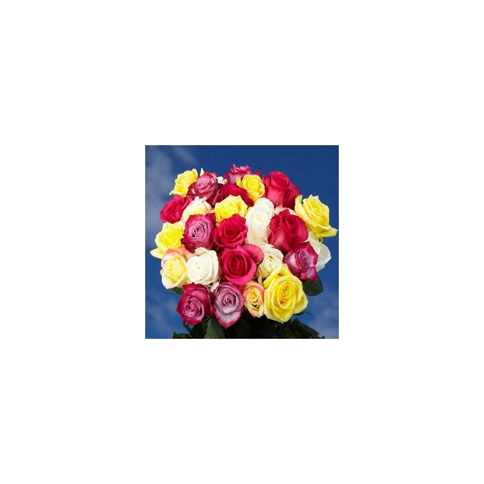 <h4>Rosa mixed in box</h4>