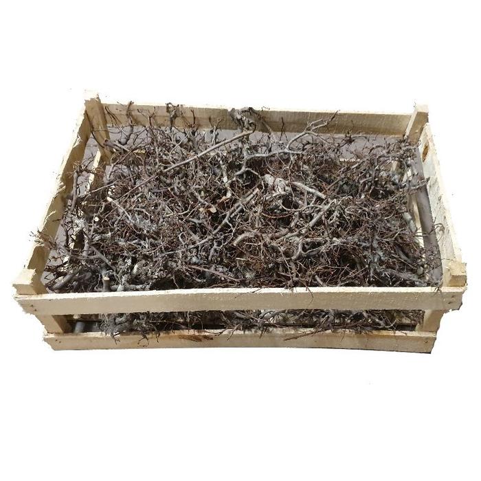 <h4>Bonsai branches in box (60-39-18) Naturel</h4>