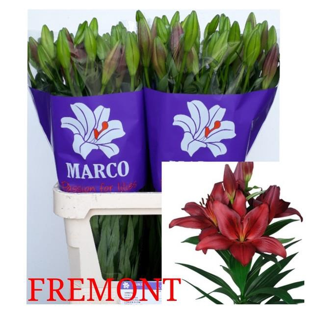 <h4>LI LA FREMONT</h4>