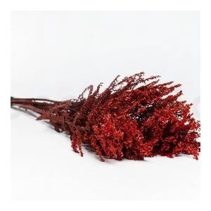 Helychrisium Diosmi Red HDI/0230
