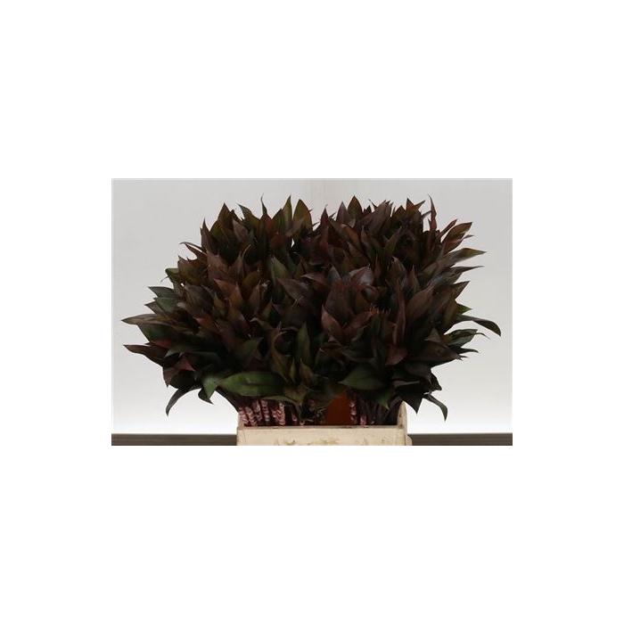 <h4>Cordyline Compacta Purple Bouquet</h4>