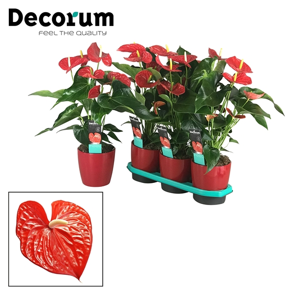 <h4>Anthurium Michigan pot 17 keramiek</h4>