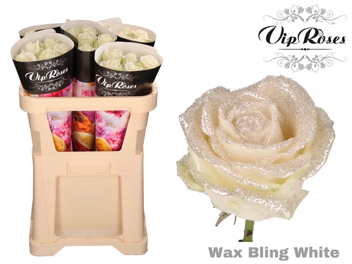 <h4>R GR WAX BLING WHITE</h4>