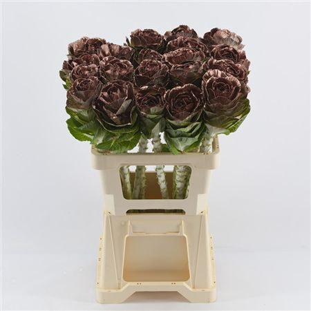 <h4>Brassica Copper</h4>