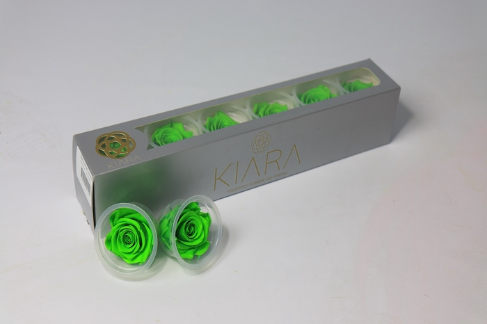 <h4>Rosa Preserved Green Glow</h4>