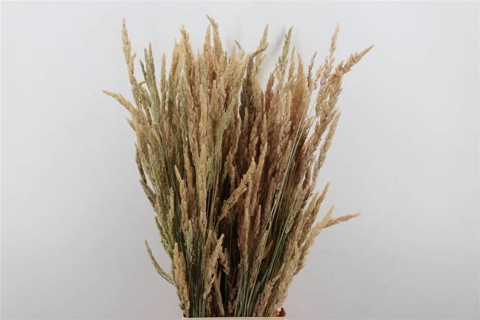 <h4>Dried Stipa Feather White Reed Grass</h4>