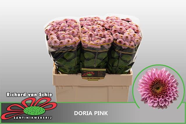 <h4>CHR S AAA DORIA PINK</h4>