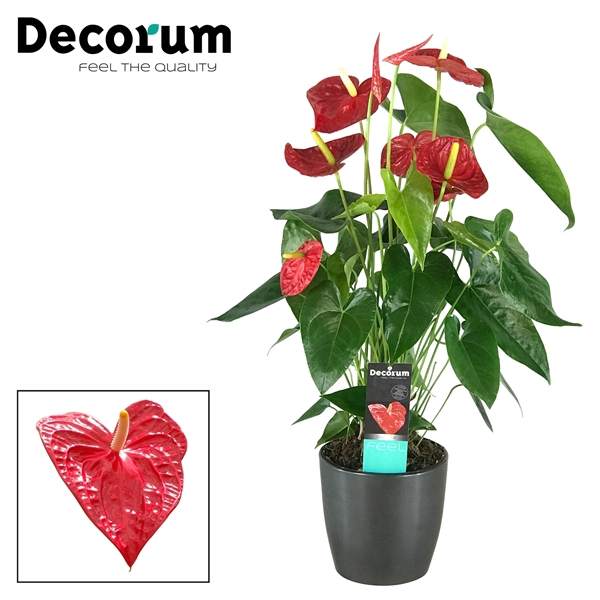 <h4>Anthurium Dakota pot 17 keramiek antraciet</h4>
