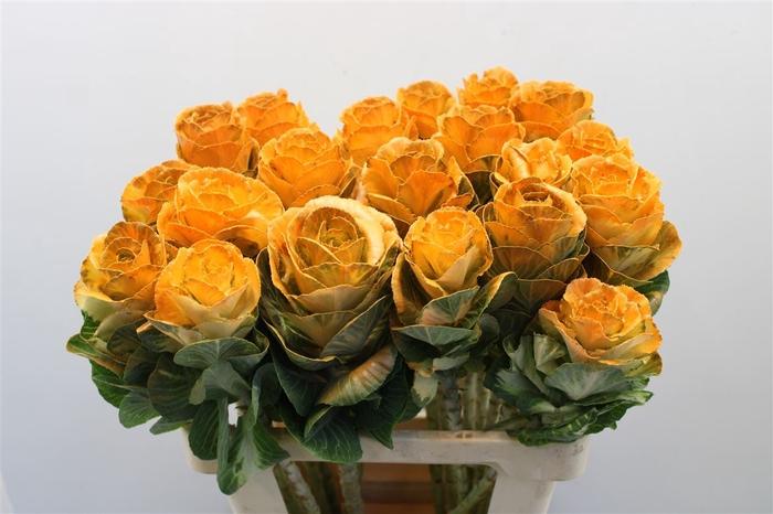 <h4>Brass Klb Oranje H%</h4>