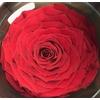Rose stab. XXL Red-02
