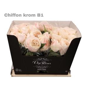 R GR CHIFFON KROM B1