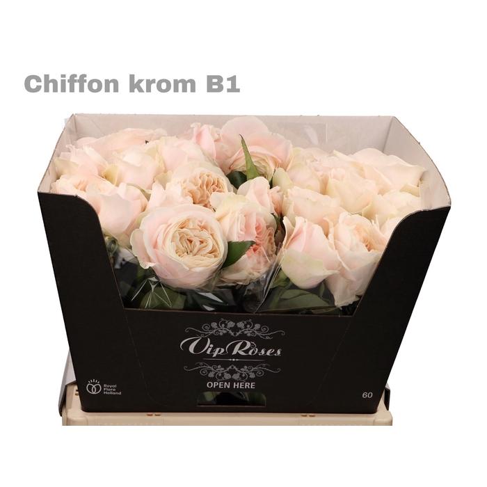<h4>R GR CHIFFON KROM B1</h4>