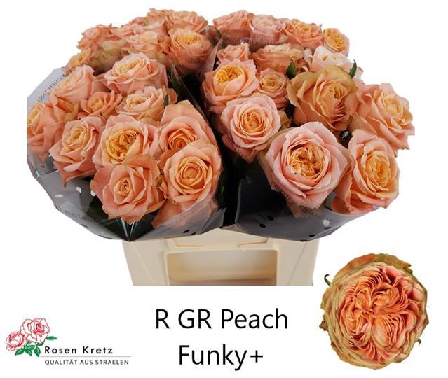 <h4>R GR PEACH FUNKY+</h4>