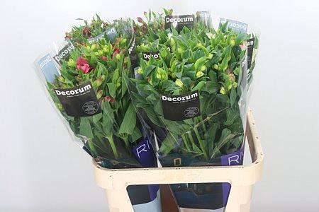 <h4>Alstr Flor Mixed</h4>