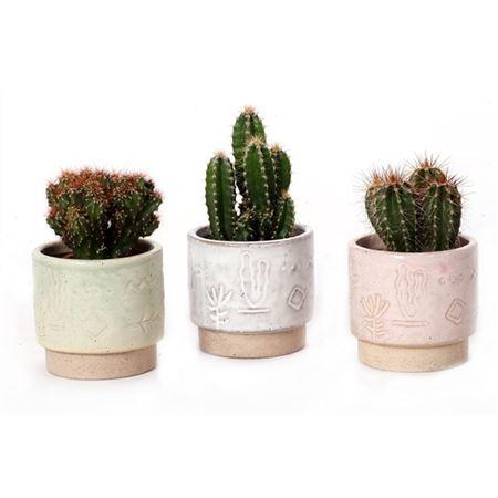 <h4>Cactus Inca 5,5 Cm</h4>