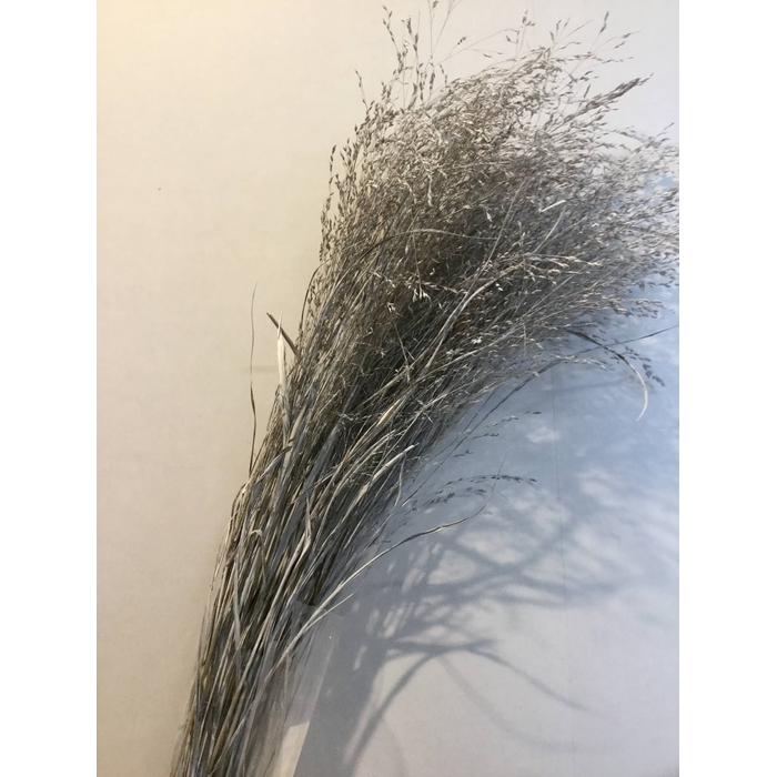 <h4>DRIED FLOWERS - GRASS WHITE</h4>