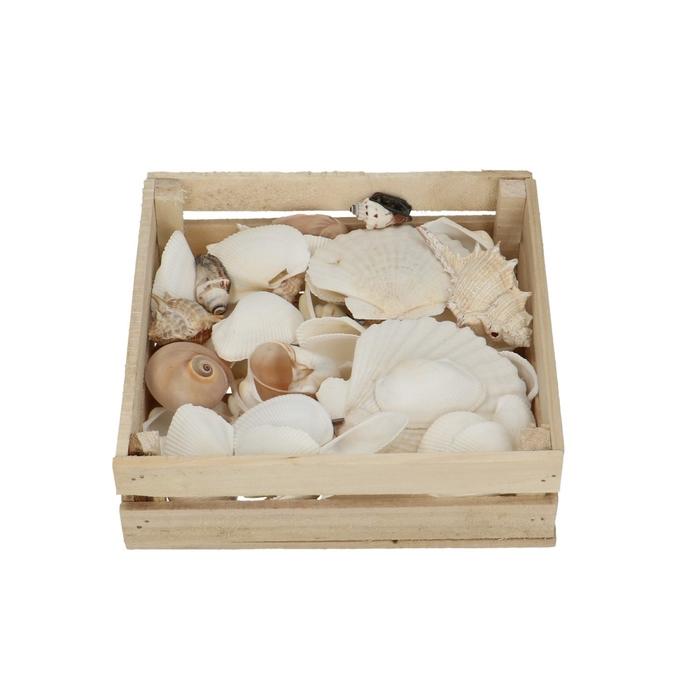 <h4>Schelpen Mix Box 18*18*5cm</h4>