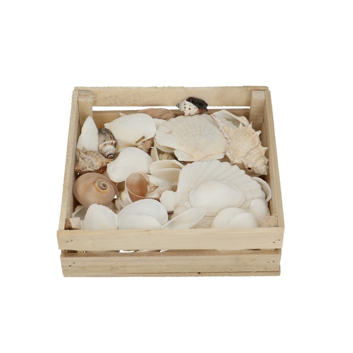 <h4>Shell Mix Box 18*18*5cm</h4>