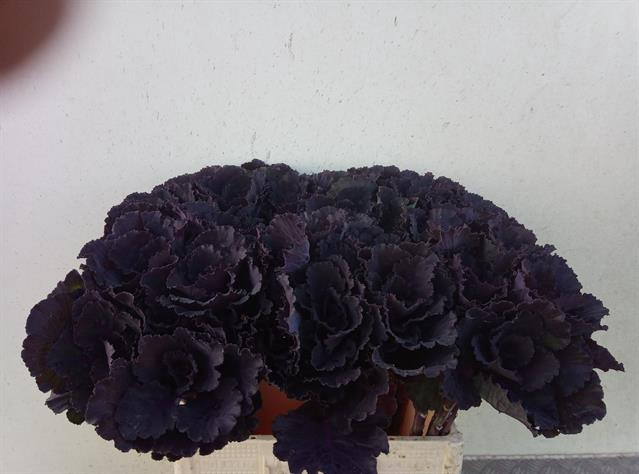 <h4>BRASS BLACK LEAF</h4>