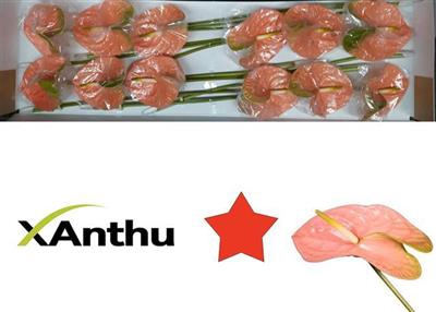 <h4>ANTH A SENATOR</h4>