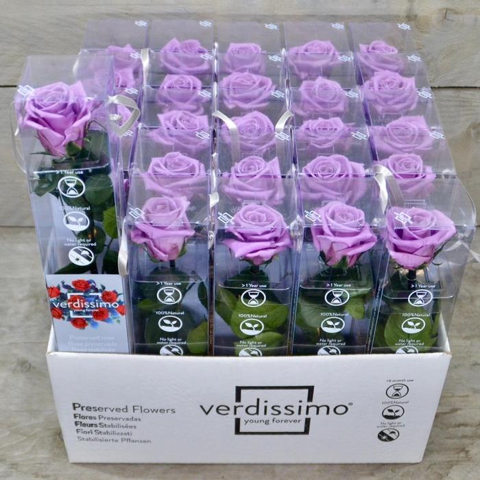 <h4>R PR Amorosa Mini Lilac</h4>