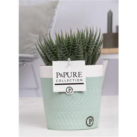<h4>Aloe Aristata Keramiek Valerie</h4>