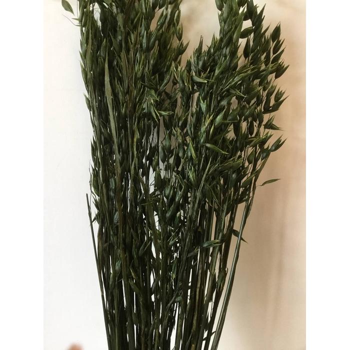 <h4>DRIED FLOWERS - AVENA MOSS GREEN</h4>