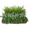 Overig 12 cm Chloropytum Green Coour outerline