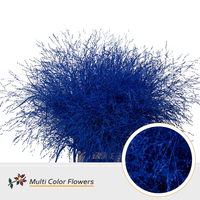 <h4>Panicum Blauw donker</h4>