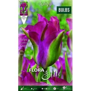 Z Tulipa Viridiflora Green Love