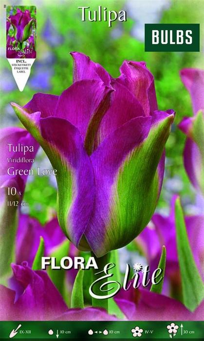 <h4>Z Tulipa Viridiflora Green Love</h4>