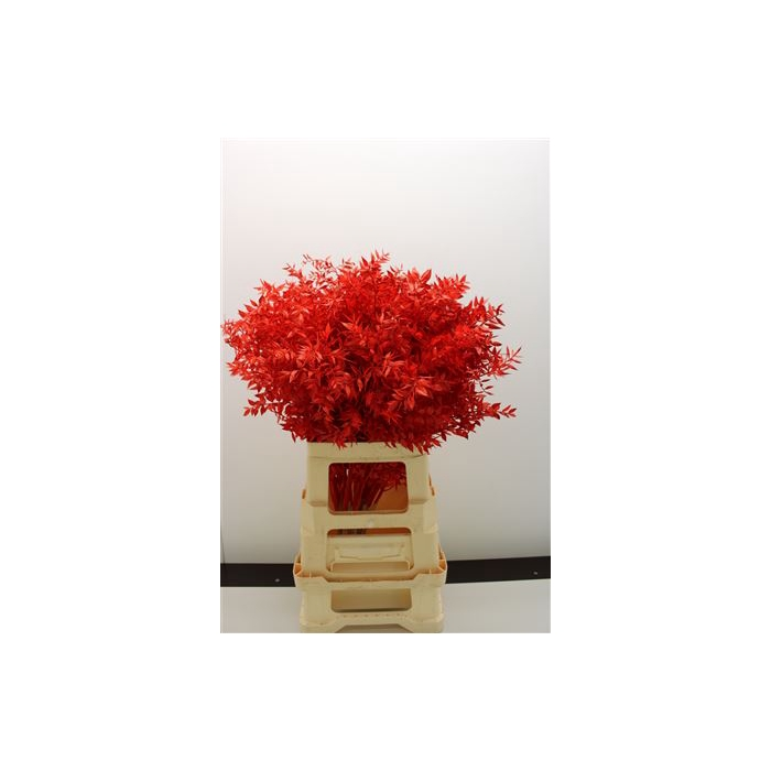 <h4>DRIED FLOWERS - RUSCUS RED</h4>