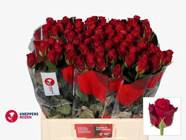 <h4>R GR RED RIBBON</h4>