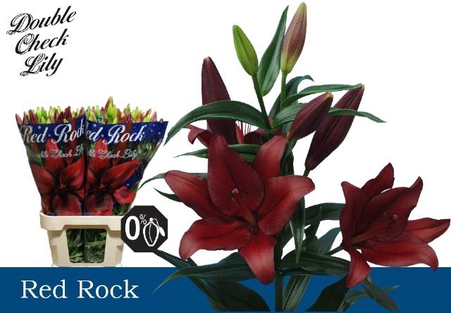 <h4>LI LA RED ROCK</h4>