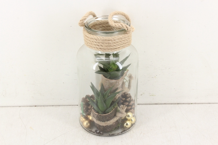 <h4>arr. SN B1 - Bottle haworthia L</h4>