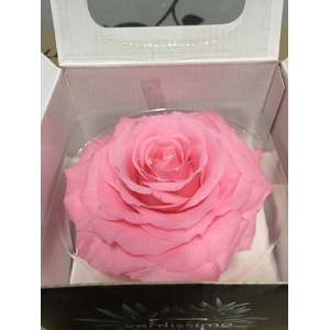 Rose Stabi King Bridal Pink