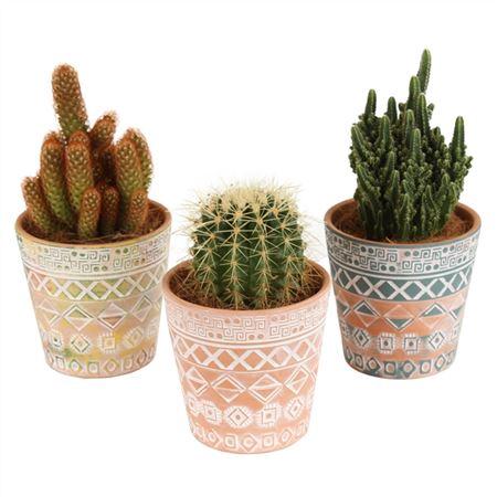 <h4>Cactus A41230171 Gemengd Keramiek African</h4>
