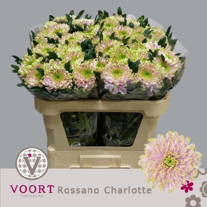 <h4>CHR G ROSS CHARLOTTE</h4>